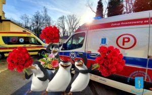 Pingwiny z madagaskaru z kwiatami i karetki przed pogotowiem